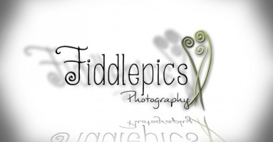Fiddle Pics Photography
